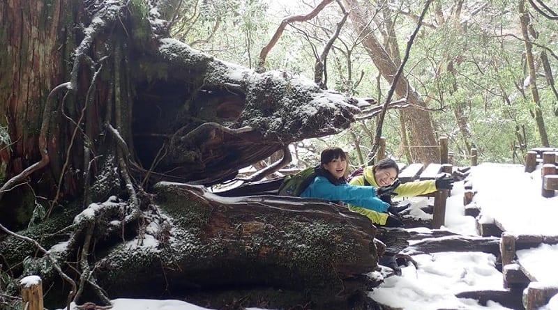 冬の縄文杉ルート