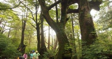 屋久島6月登山