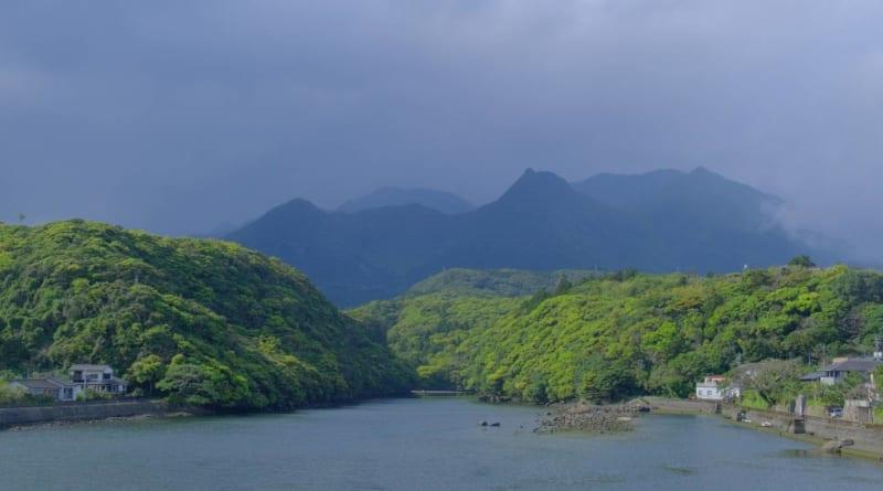 新緑の安房川